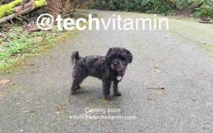 @techvitamin is a podcast about people in technology. Host is John Pollard. Co-hosts are Shree Madhavapeddi, Gary Clayton, Michael Cohen and Doug Aley. Based in Seattle.